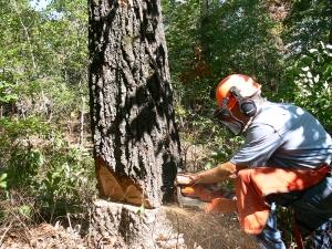 Длъжностна характеристика на длъжността Резач, горски дървен материал