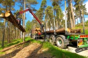 Длъжностна характеристика на длъжността Извозвач дървен материал