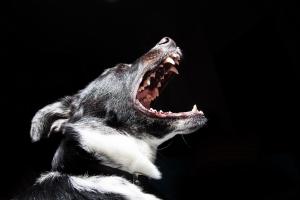 Първа помощ при ухапване от куче