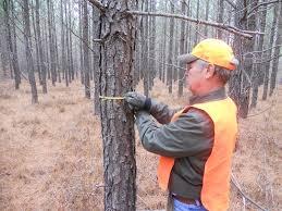 Длъжностна характеристика Маркировач лесофонд и дървен материал